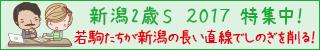 新潟2歳ステークス